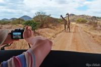 <p>Кения, Тсаво. Фотографируем жирафов</p>