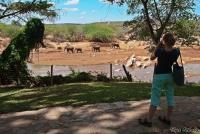 <p>Кения, Самбуру. Наблюдение за слонами в Sarova Shaba Game Lodge</p>