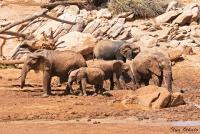 <p>Кения, Национальный парк - заповедник Шаба. Слоны.</p>