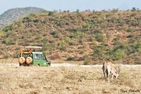 <p>Кения, Национальный парк - заповедник Шаба. Пейзаж с ориксом.</p>