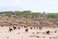<p>Кения, Национальный парк - заповедник Буффало Спрингс. Планета обезьян.</p>