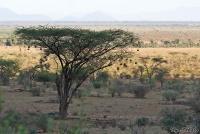 <p>Кения, Национальный парк - заповедник Самбуру. Пейзаж</p>
