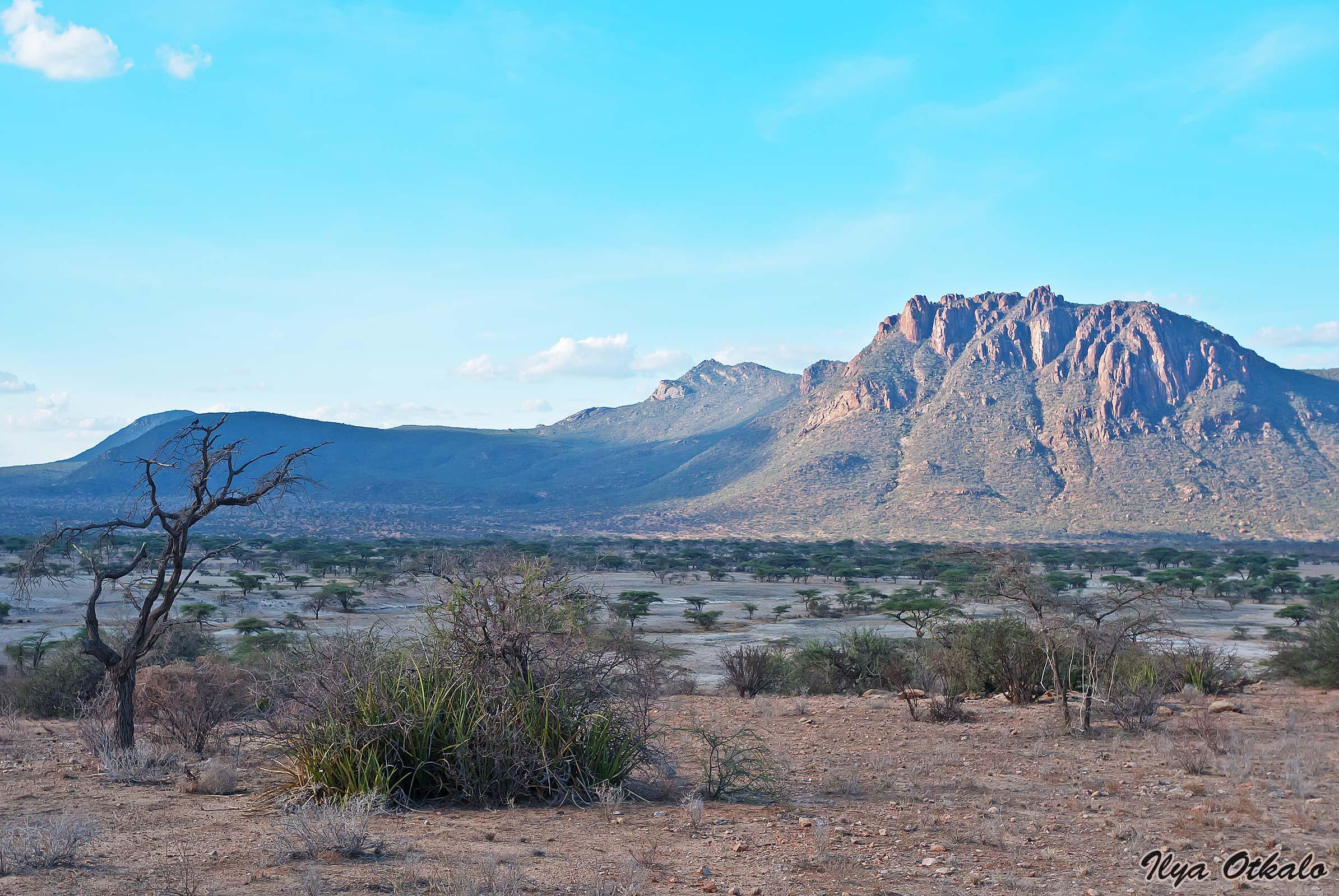 Кения, Национальный парк - заповедник Шаба.